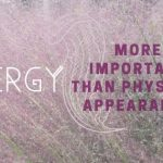 Energy is more important than physical appearance